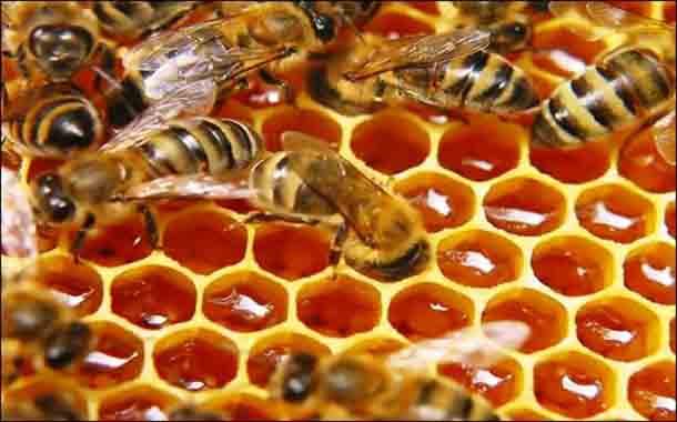 درمان زخم با عسل درمانی