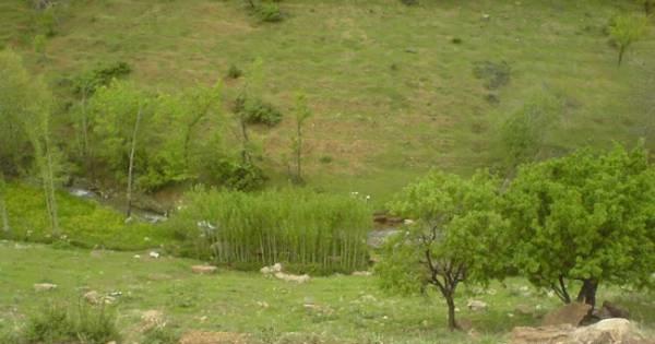 طبیعت باغ دره