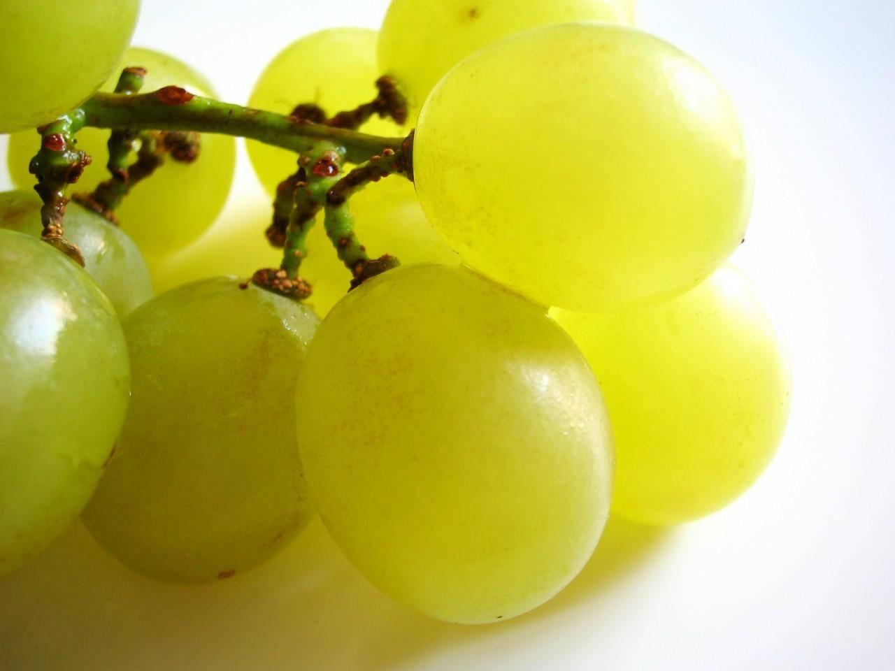 اهمیت مصرف انگور برای حفظ سلامتی بدن